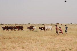 Réseau Billital Maroobé : Boureima Diallo succède à Adama Koura