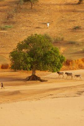 Reportage au Burkina Faso : Et si l'agroécologie revitalisait la terre morte ?