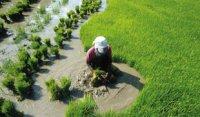 Publication Iddri : Fin de la faim : comment assurer la transition agricole et alimentaire ?