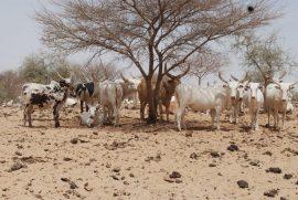 Déclaration de la société civile de l'Afrique de l'Ouest sur l'APE