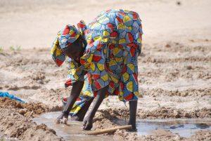 Communiqué de la société civile française : Assez de déclarations pour l'agriculture familiale paysanne