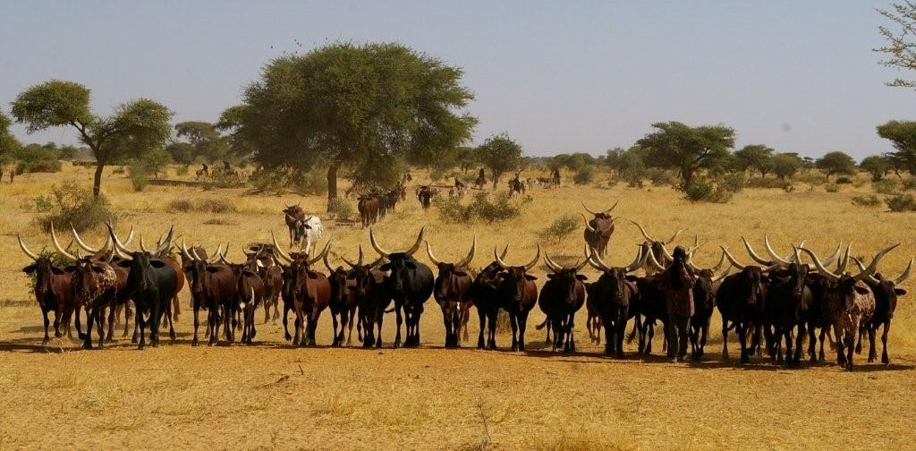 Rural 21 : Pastoralists – the forgotten hungry?