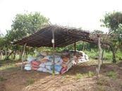 Cacao ivoirien : agriculture familiale versus agro-industrie ?