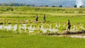Fiche : Un projet innovant d'agriculteurs à agriculteurs – L'agriculture de groupe