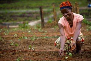 Article SPORE: Les enseignements du PDDAA: 10 années d'efforts intenses pour l'Afrique