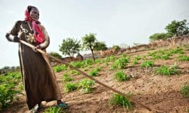 Article TheGuardian: How effective have agricultural land tenure reforms been in Africa?