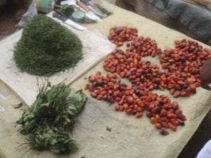 Wild Food, Prices, Diets and Development: Sustainability and Food Security in Urban Cameroon