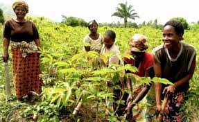Improving Opportunities for Women Farmers in Africa