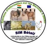 Bulletin : « Flash Info » sur les marchés à bétail du Niger