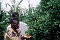 Presse : Le Liberia ouvre une formation diplômante axée sur l'agriculture régionale