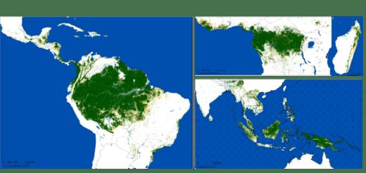 Une cartographie sans précédent révèle une perte de 220 millions d'hectares de forêts tropicales humides depuis 1990