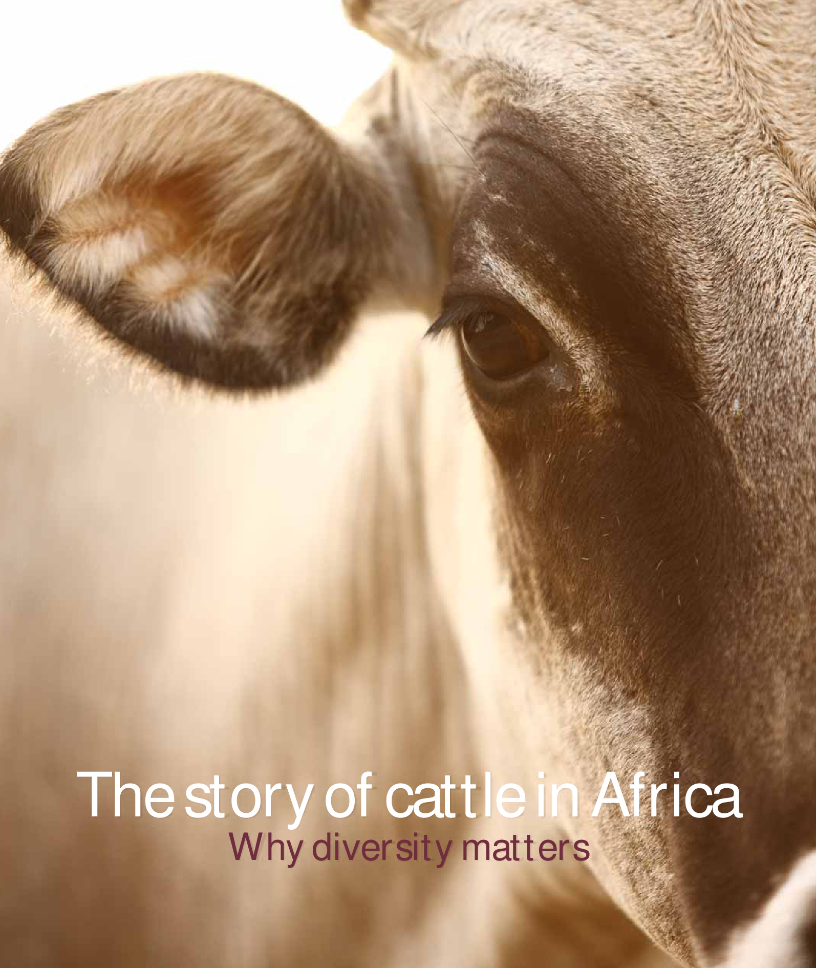 The story of cattle in Africa, Why diversity matters