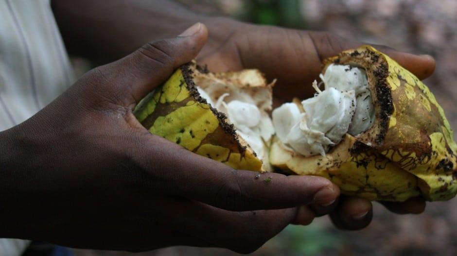 Le pouvoir d'agence des producteurs de cacao et le différentiel de revenu décent : les leçons des organisations de la société civile
