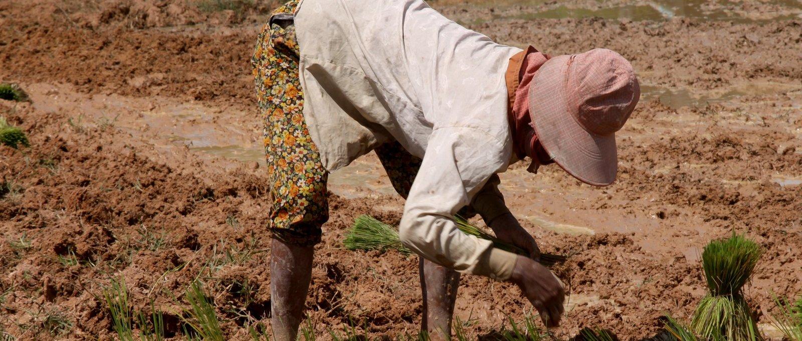 Le « Big data » : allié ou ennemi des petits agriculteurs ?