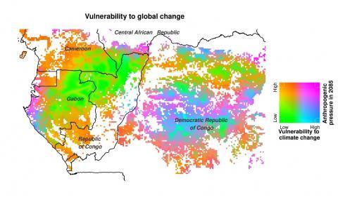 Des forêts d'Afrique centrale particulièrement vulnérables aux changements globaux