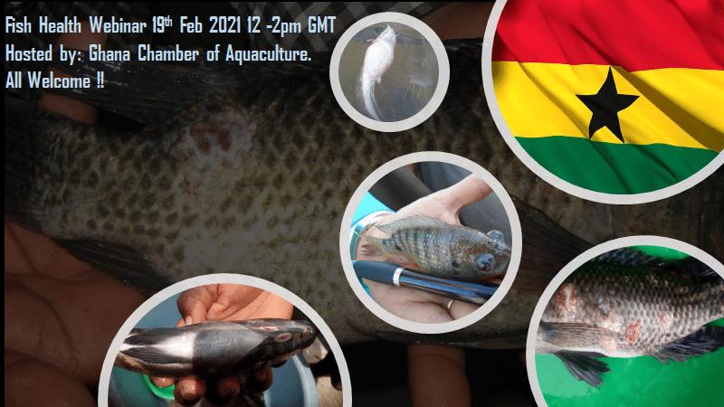 La santé des poissons dans le secteur de l'aquaculture au Ghana