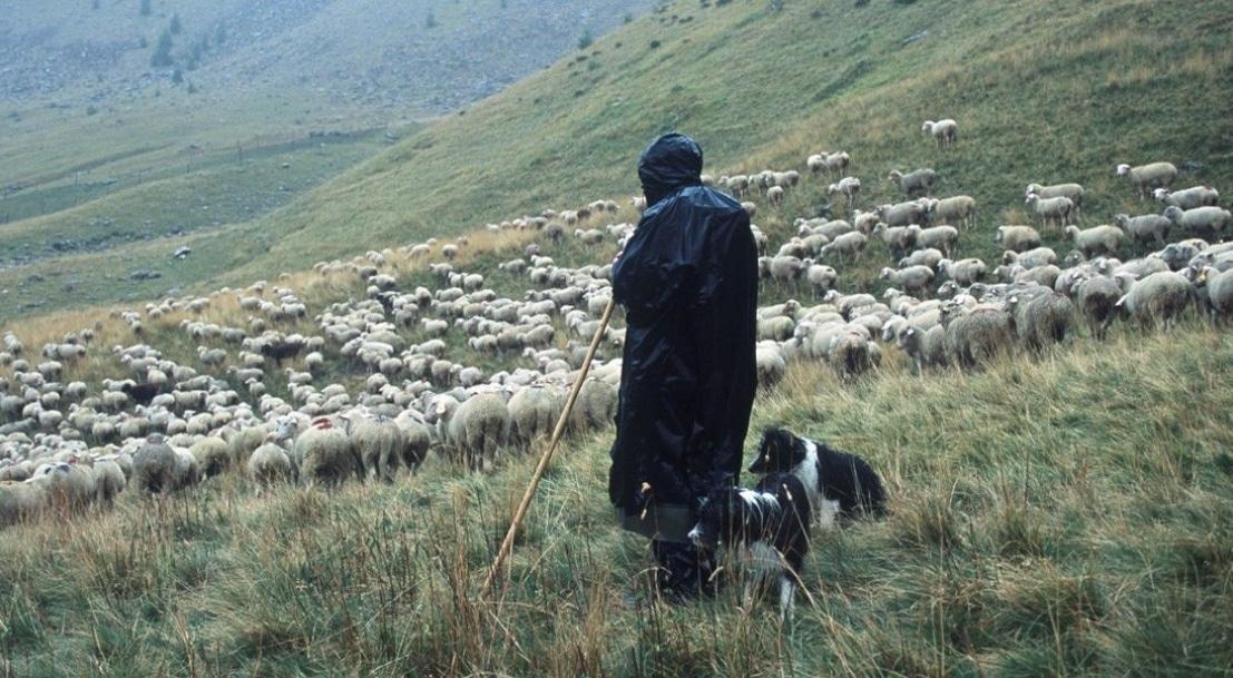 Le pastoralisme français à l'horizon 2035 - Analyse n°159