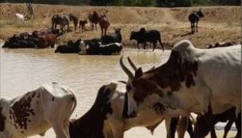 Cycle sur le pastoralisme