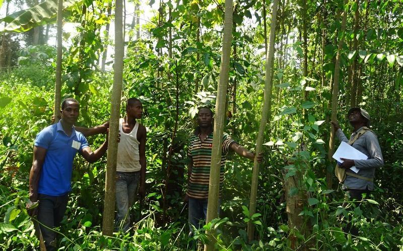 Préserver et valoriser les forêts d'Afrique centrale - Exposition photo